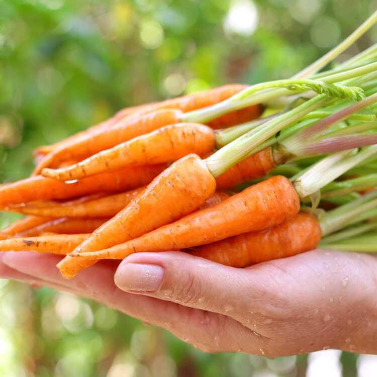 Cà rốt là Thực phẩm chống ung thư