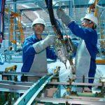 Sản xuất cồn khô, tư vấn quy trình chuyển giao công nghệ